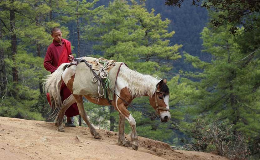 ভুটান ঘোরাঘুরি - shajgoj.com